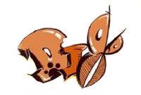 菲菲兔的头像