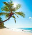 沙滩阳光的头像
