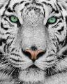 老虎的错的头像