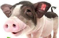 小董猪客的头像
