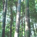 竹海绵绵的头像