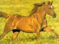 汗血良马的头像