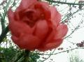 花开花红的头像