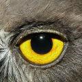 第七只眼的头像