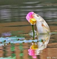 叉江鱼的头像