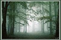 林业发的头像