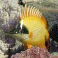 美丽的菩萨鱼的头像