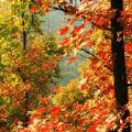 万山红叶的头像