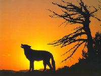沙漠红狼的头像