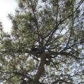 漏光的树的头像