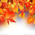 秋风舞残红的头像