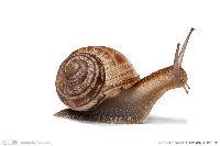 小蜗牛的愿望的头像