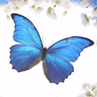 蓝羽蝴蝶的头像