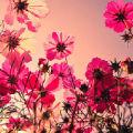 粉红色的夏天的头像