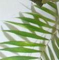 竹叶清茶的头像